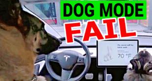 Tesla Fixing Dangerous Bug in Dog Mode Feature